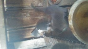 Young kittens in Alamogordo, New Mexico