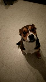 dog to good home in Fort Hood, Texas
