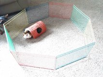 Guinea pig playpen with play tunnel in Naperville, Illinois