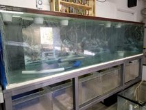 fish tanks in Yucca Valley, California