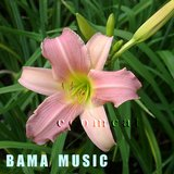 LT PINK DAYLILY 'Bama Music' in pots HTF in St. Charles, Illinois