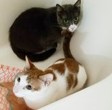 2 declawed, and fixed cats to good home in Fort Rucker, Alabama