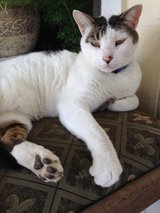 charlie needs a new home in Kingwood, Texas