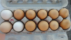 Farm Fresh Eggs in Lawton, Oklahoma