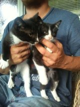 2 Free Kittens in Fort Knox, Kentucky