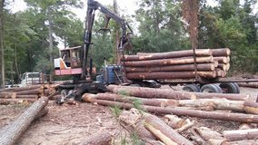We buy timber cash paid in Conroe, Texas