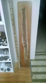 Mounted snake skin in Alamogordo, New Mexico