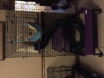 Ferret and cage in Fort Polk, Louisiana
