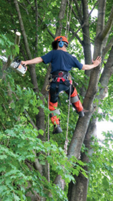 TREE SERVICES in Spring, Texas