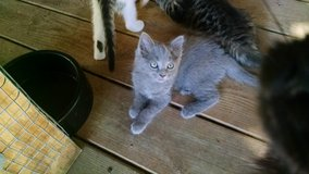Free adorable kittens-litter trained-will deliver in Fort Campbell, Kentucky