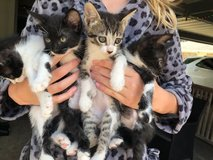 Kittens Looking for Forever Homes in Baytown, Texas