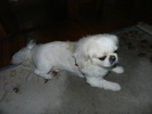 barter your dog grooming service for music lessons -- guitar, harmonica, vocal accopaniment in St. Charles, Illinois