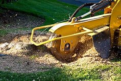 Stump Grinding in Fort Campbell, Kentucky