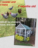 chickens, coop & feed in Fort Rucker, Alabama