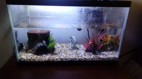 10g fish tank with whole set up in Leesville, Louisiana