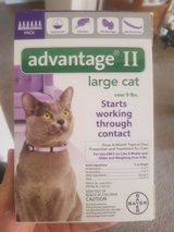 New ADVANTAGE ? for large cat in Travis AFB, California