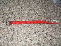 collar and leash for very small animal in Alamogordo, New Mexico