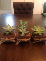 Wooden Holder for succulents in Orland Park, Illinois