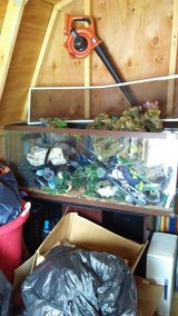 55 gallon reptile tank in Colorado Springs, Colorado