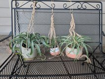 Hanging Plants - Fake Plants in Perry, Georgia