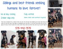 Best friends need a chance in Alamogordo, New Mexico