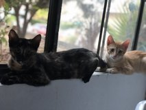 Two kittens in Camp Pendleton, California