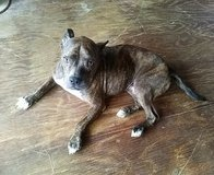 Male Dog needs good home asap in Beaufort, South Carolina
