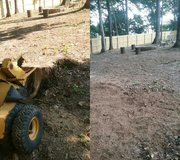 Stump Grinding and Tree Removal in Clarksville, Tennessee