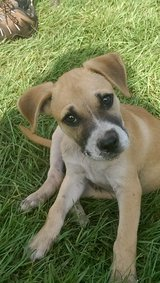 Free Puppy in Conroe, Texas