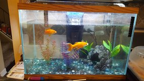 30 gal fish tank with filter and light in Naperville, Illinois