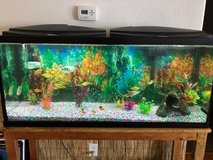 Complete 55gal Aquarium Set Up in Fort Lewis, Washington