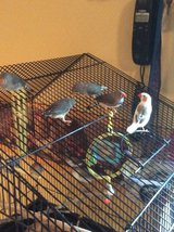 Finches in Cherry Point, North Carolina