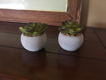 Pair of small potted faux-succulents in Naperville, Illinois