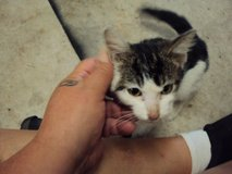 Kitten found in West Creek subdivision 8/15 in Fort Campbell, Kentucky