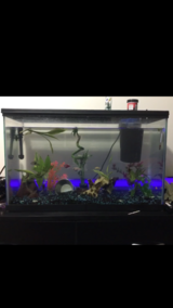40 gallon fish tank everything included in Aurora, Illinois