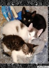 Kittens in Vacaville, California
