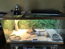 Bearded Dragon, tank & accesories in Orland Park, Illinois
