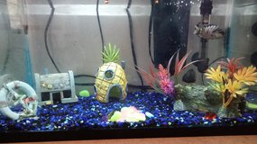 10g fish tank with fish in DeRidder, Louisiana