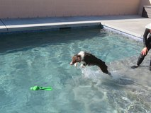 Dog Training: Swimming, Obedience, Agility and more... in Yucca Valley, California