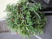 Outdoor Multi-type Plant in Ramstein, Germany