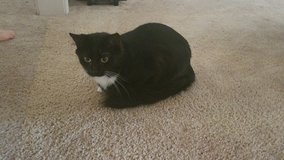 2 cats free to good home in Fort Rucker, Alabama