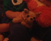 Lost beloved stuffed brown chihuahua in Fort Meade, Maryland
