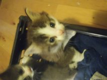 Kittens in Lockport, Illinois