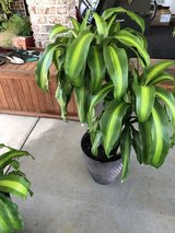 2  Plants (real) in Warner Robins, Georgia