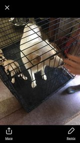 Urgent! Foster Needed ASAP! Pyrenees, Life or Death issue. Rescue will cover all expenses. in Leesville, Louisiana