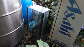 Free fish tanks in Okinawa, Japan