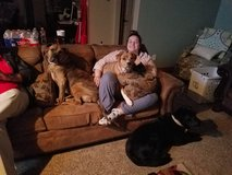 Mastiff Pit in Lawton, Oklahoma