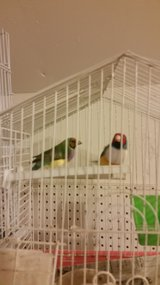 PAIR LADY GOULDIANS CAGE AND NEST in Oceanside, California