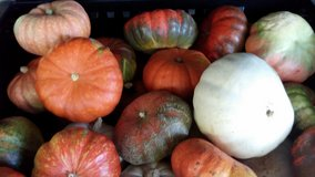 Pumpkin Sale in Clarksville, Tennessee