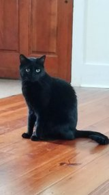 Free cat in Beaufort, South Carolina